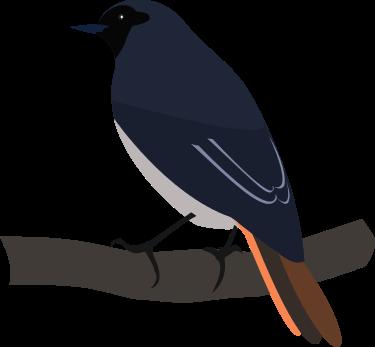 logo/BlackRedstartM.png